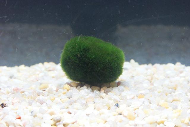 podvodná rastlina