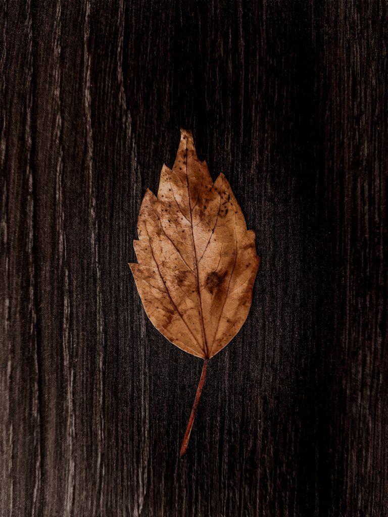 list na drevenej podlahe