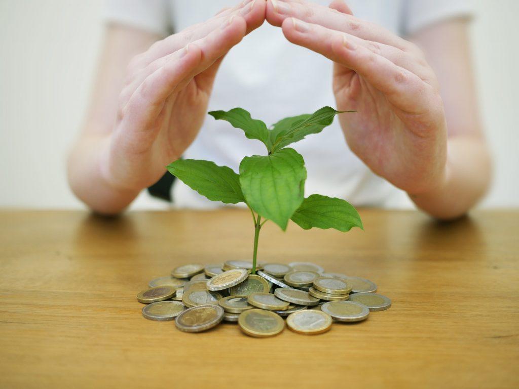 z peňazí vyrastá rastlina
