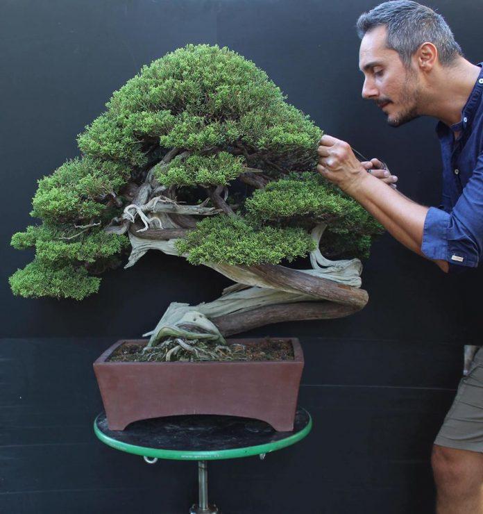 pán s bonsajom