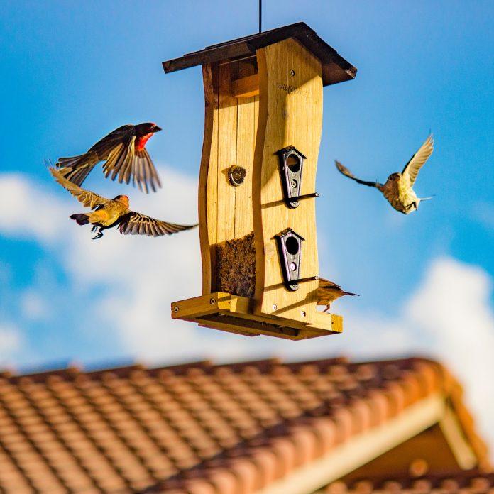 ručne robená vtáčia búdka pre vtáčiky