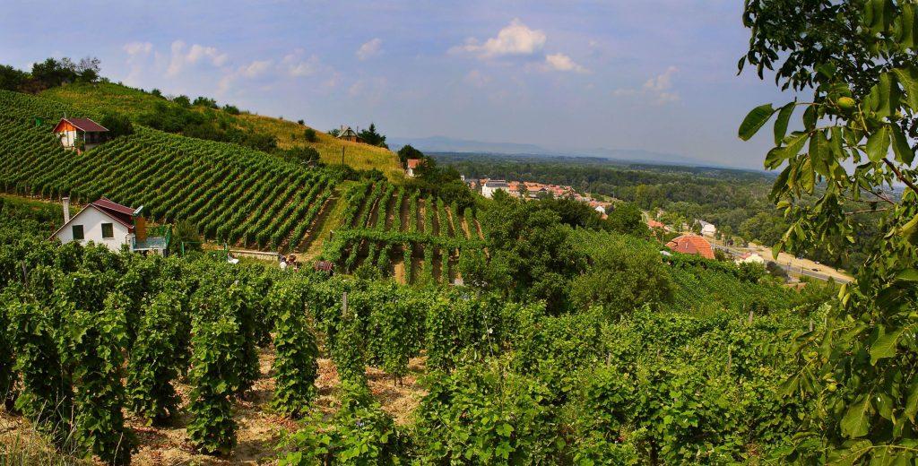 vinice v okolí Košíc a inohradnícka oblasť na Slovensku