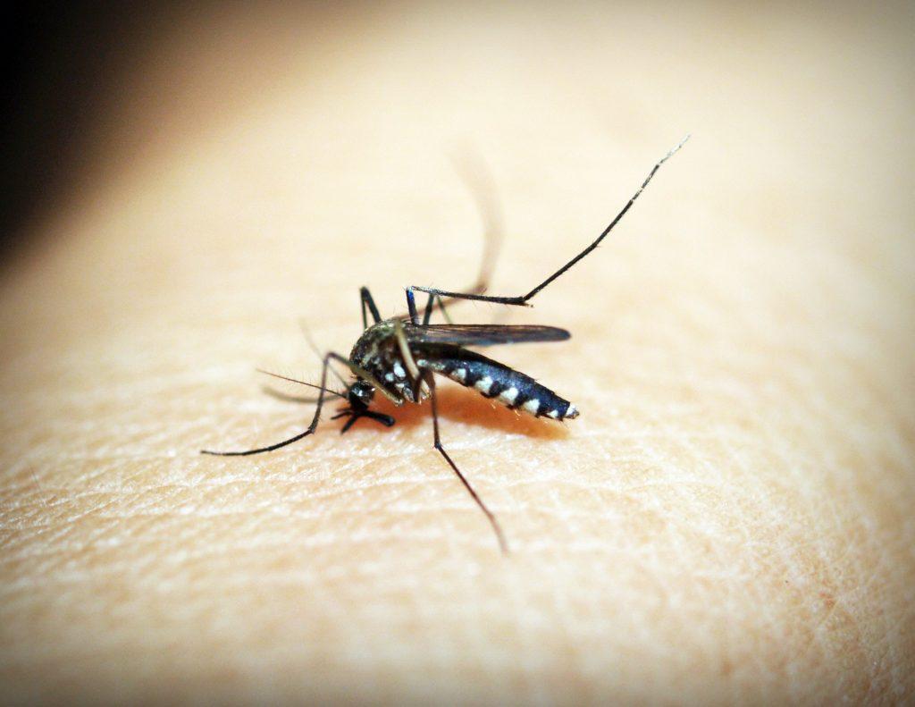 komár cicia krv z ruky