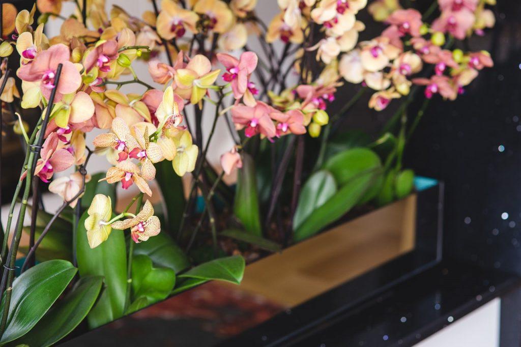 krásne mladé orchidey v obchode