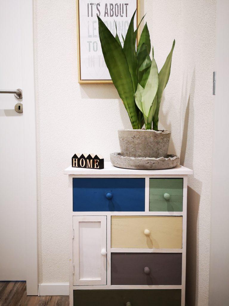 interiérový doplnok v podobe živej rastliny v betónovom handmade kvetináči