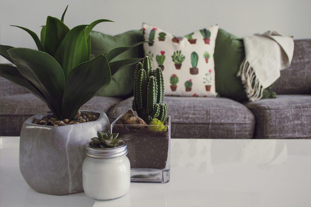 črepníky so zelenými rastlinami v obývacej miestnosti
