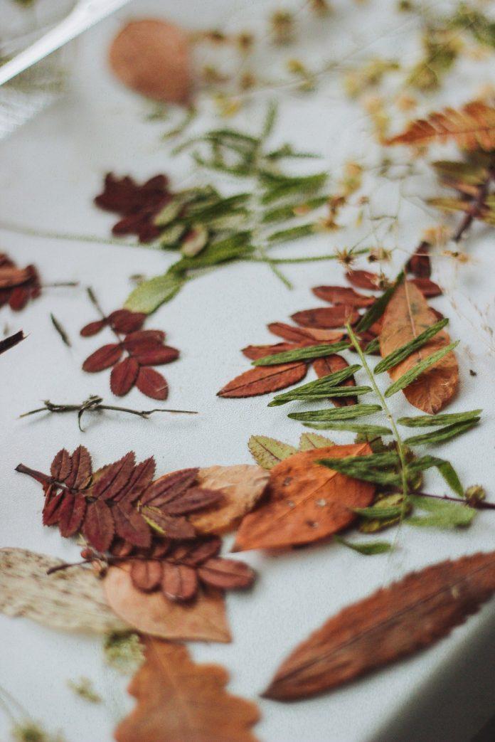 jesenné farebné listy na bielom obruse