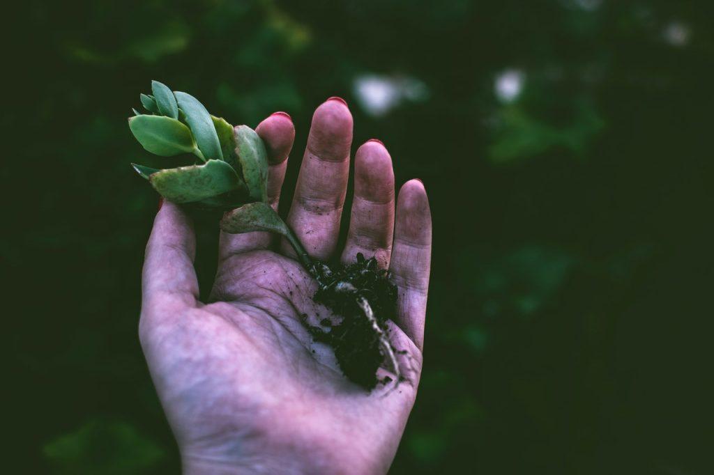 mladá žena presádzajúca rastlinky do atypického kvetináča - kokedamy