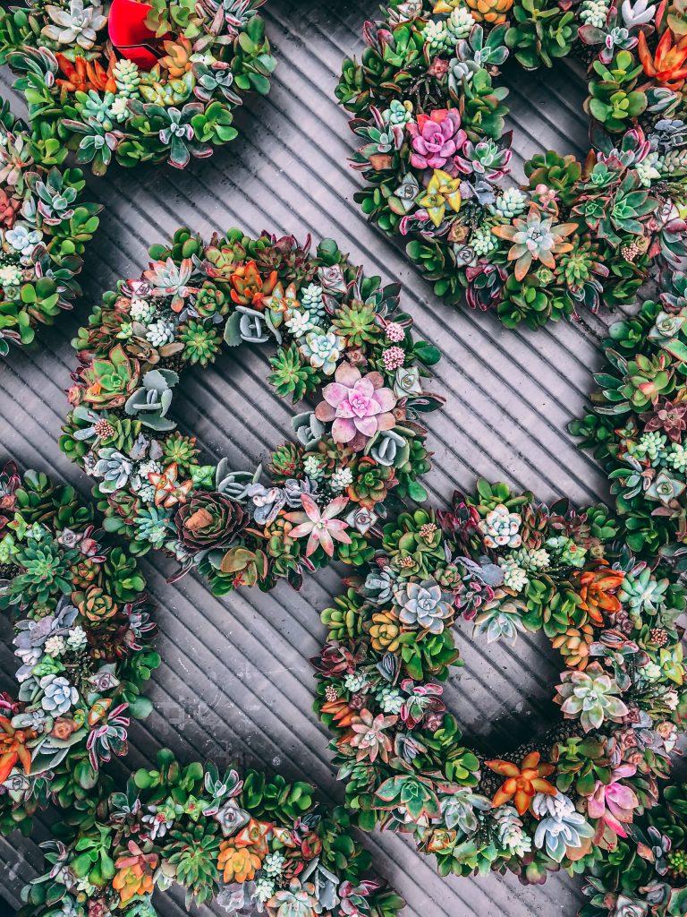 krásne farebné vence zo sukulentov a živých kvetín