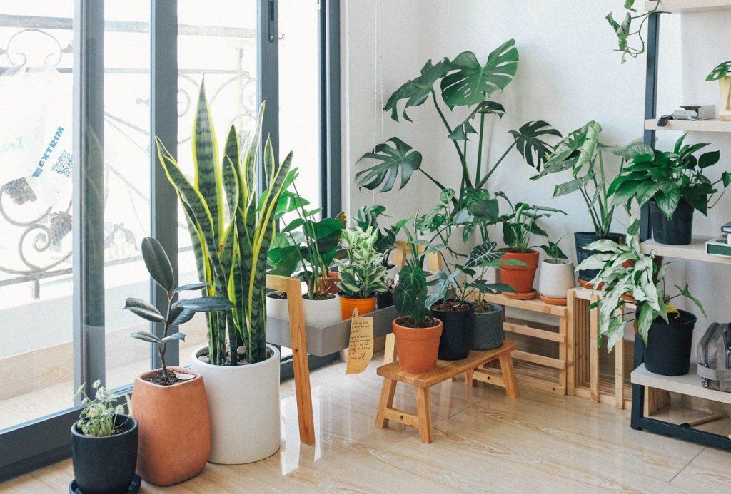 krásne zelené rastliny v interiéri