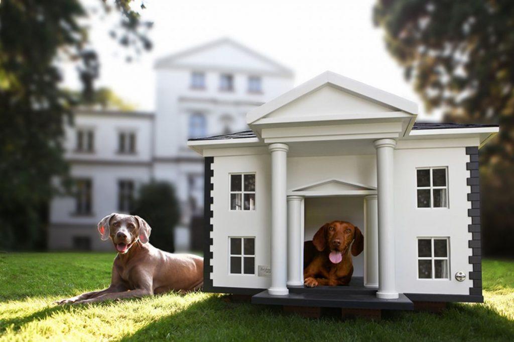 psia búda ako Biely dom