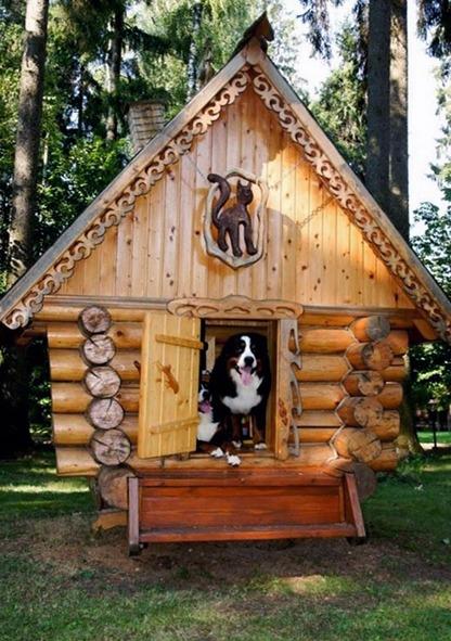 psia búda v tvare dreveného zrubu