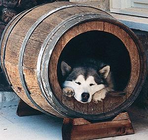 oddychujúci psík v pohodlnej búde v tvare suda