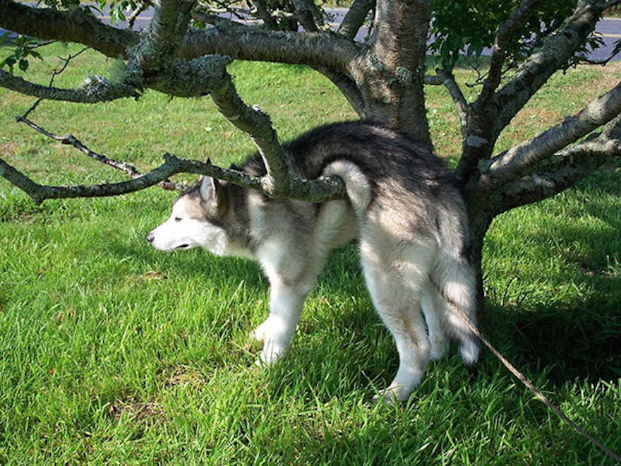 psík zaseknutý na strome
