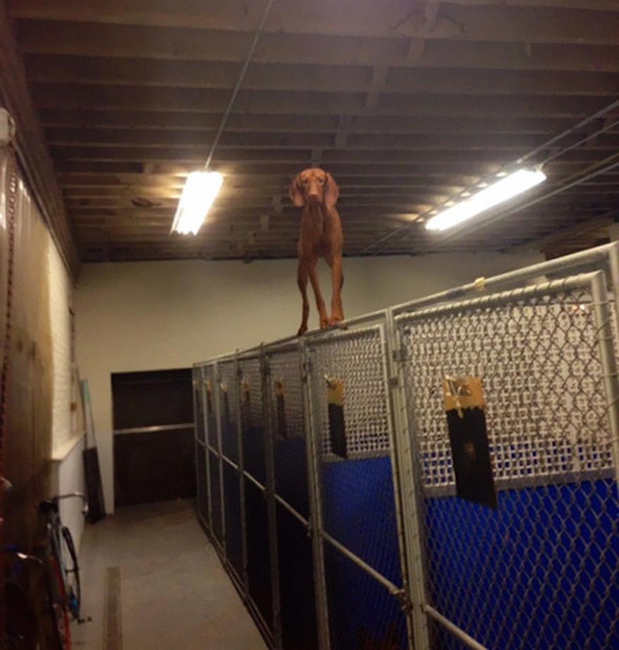 psík stojaci na plote