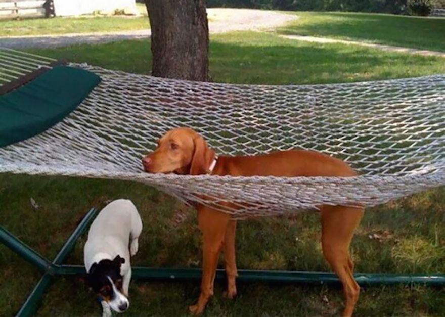 dva psíky na hojdačke