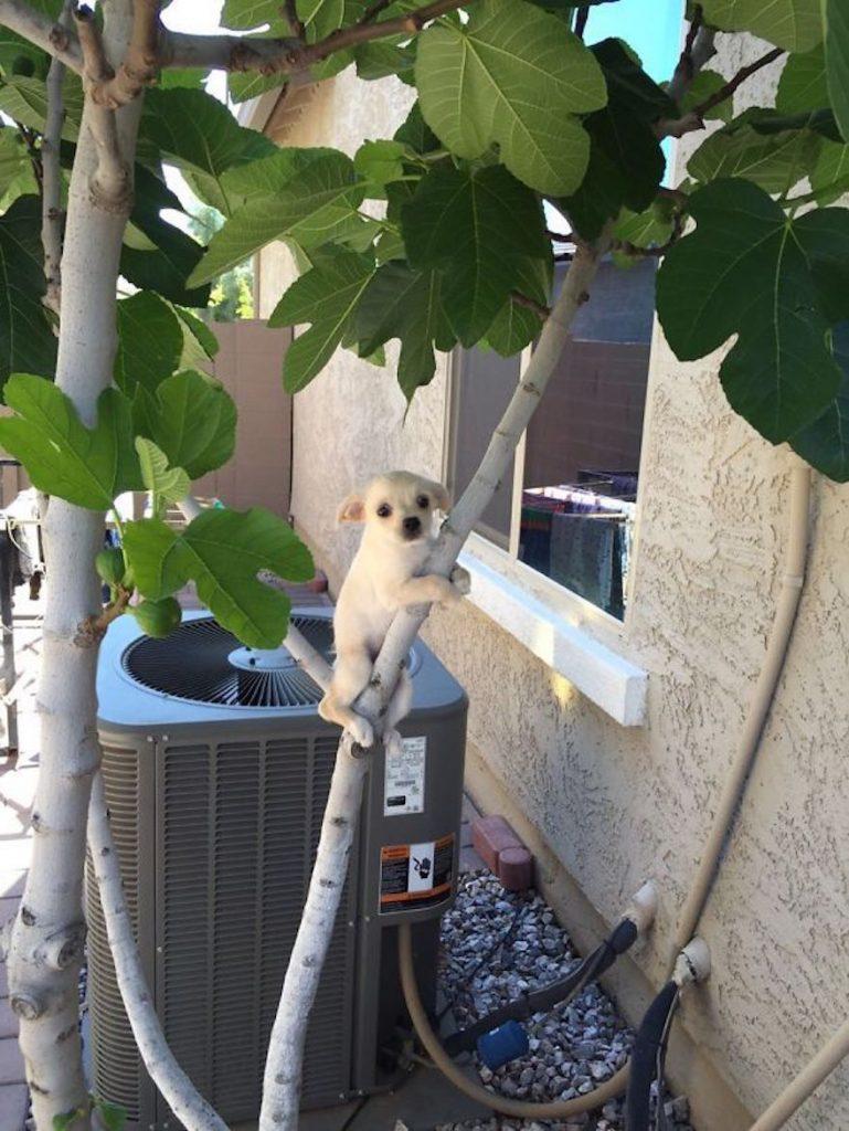 psík visiaci na strome