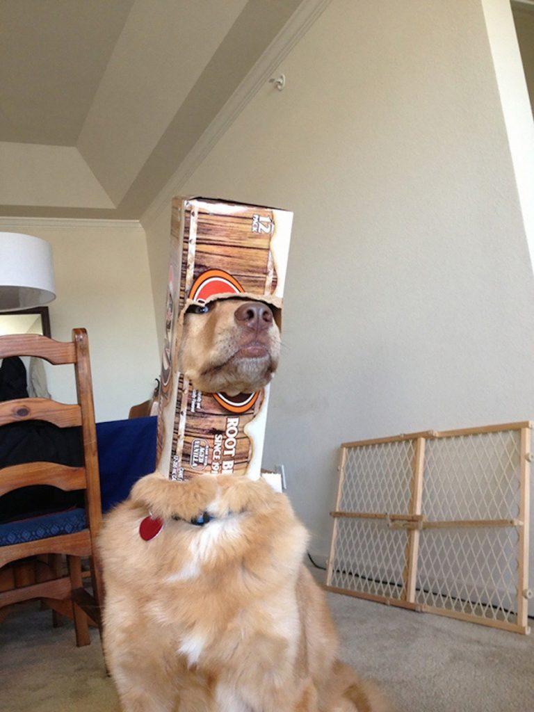 psík s krabicou na hlave