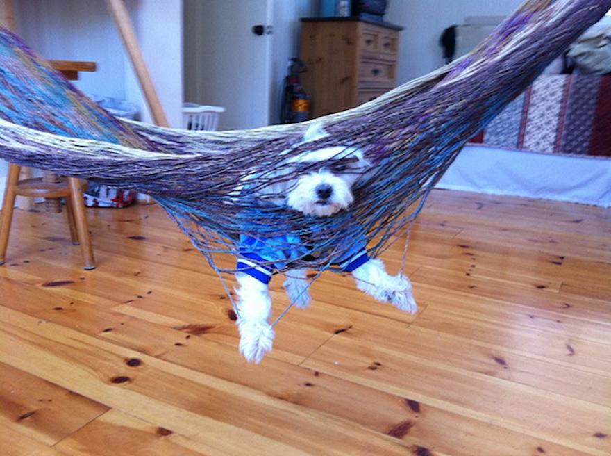 psík zaseknutý v hojdačke