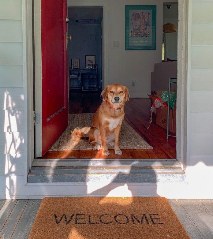 milý psík sediaci na prahu dverí