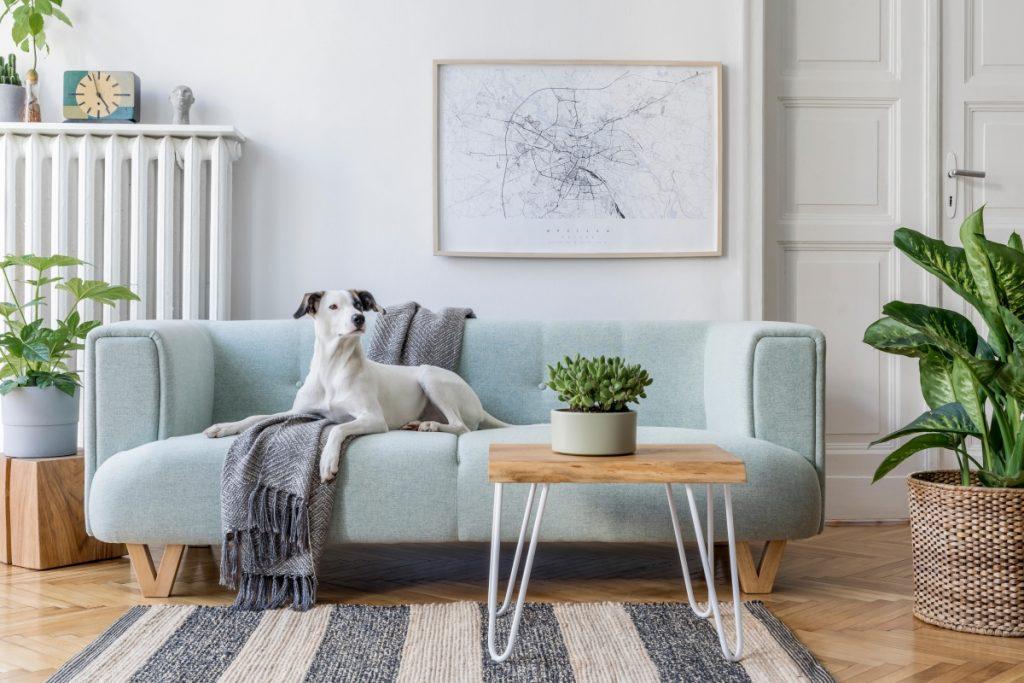 moderná obývačka so zelenými rastlinami a farebnými dekoráciami