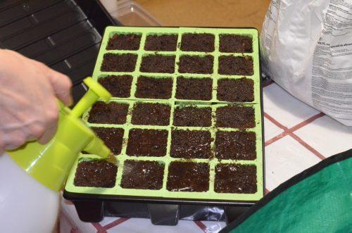 rosenie substrátu jednotlivých semien
