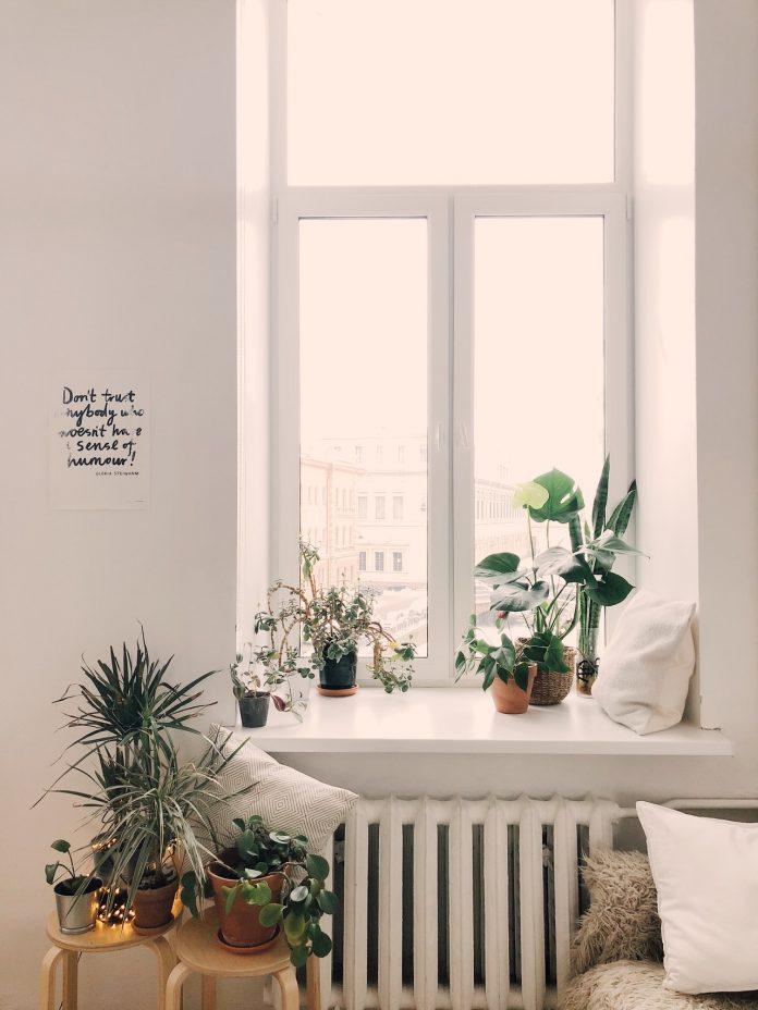 viacero druhov rastlín okrasných listom v spálni