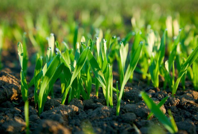 Rastúce rastliny