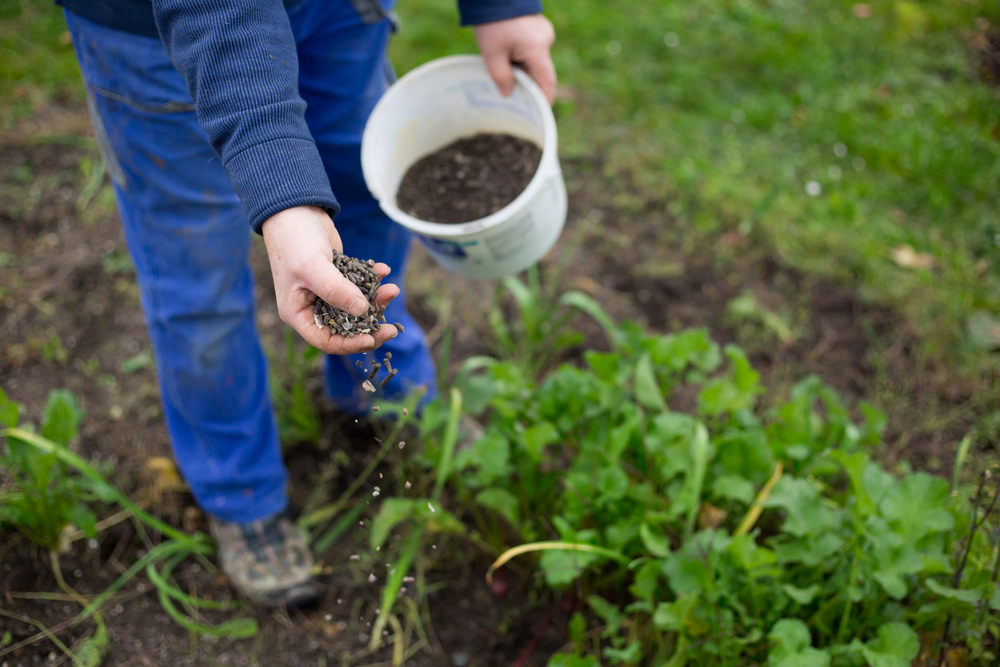 Hnojenie záhonu