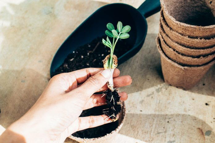 Ruka držiaca mladú rastlinku