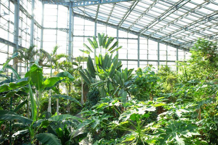 Skleník s rastlinami