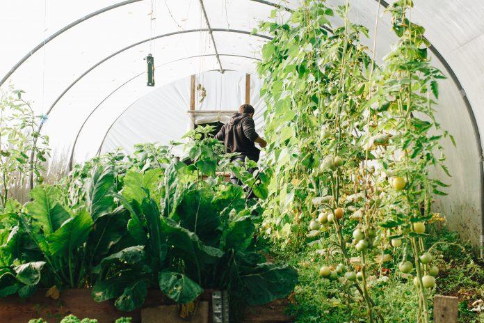 Skleník veľa rastlín