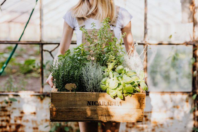 Žena s debničkou v skleníku