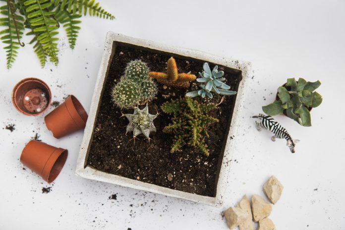 Debnička s rastlinami