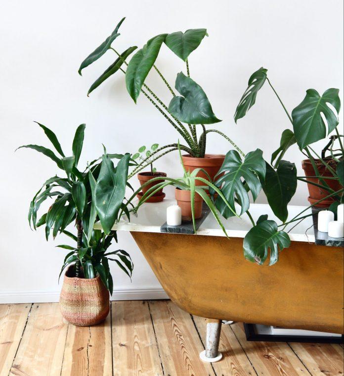 Vaňa obkolesená rastlinami