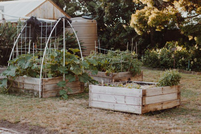 Záhrada s vyvýšeným záhonom