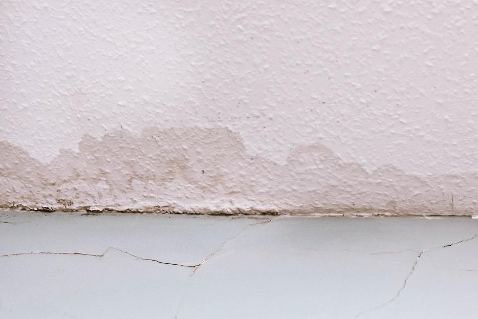 Vlhká stena